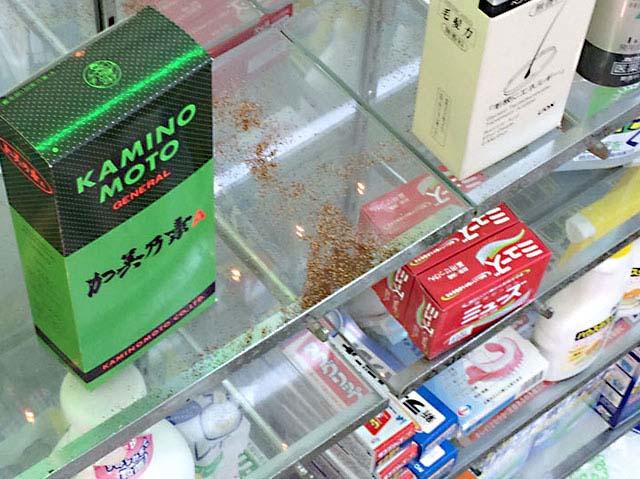 横浜市:アメリカカンザイシロアリ。