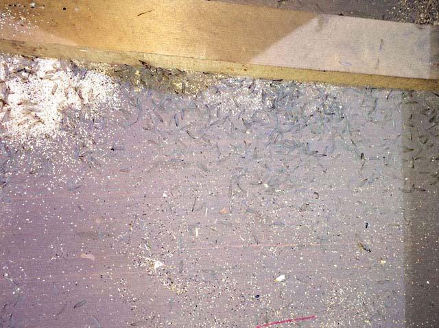 中野区:アメリカカンザイシロアリ。