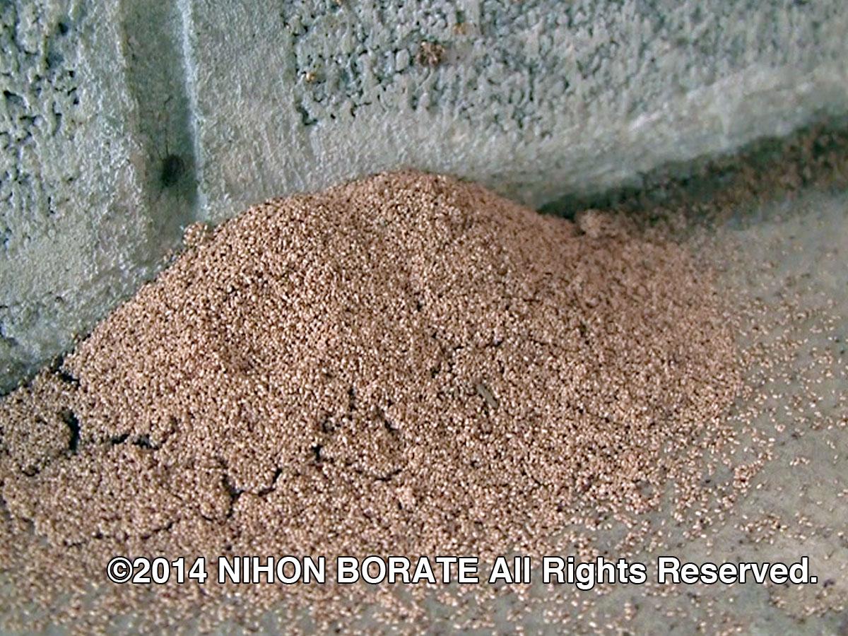アメリカカンザイシロアリの糞、基礎の近くに落ちている