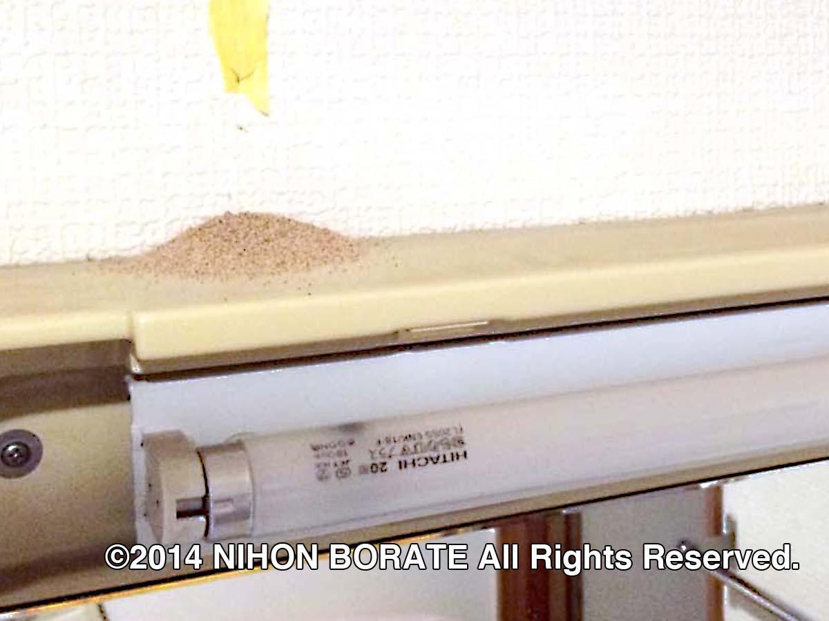 アメリカカンザイシロアリの糞、洗面台にも出る。